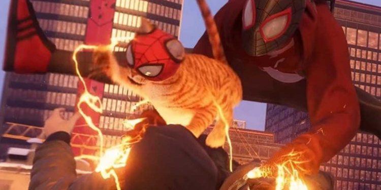 Spider-Man el gato, el compañero de Miles Morales que causa revuelo
